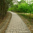 Stock Photo: Path in country side