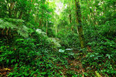 Tropical Rainforest Landscape — Stock Photo