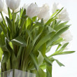 White tulips in a vase - Stock Photo