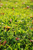 Green grass background, low angle view — Stock Photo