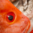 Close up of fish head — Stock Photo