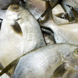 Stock Photo: Pomfret fish