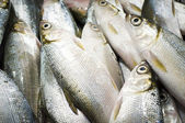 Fish vendor, asian — Stock Photo