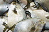 Pomfret fish — Stock Photo