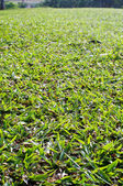 Low angle view of grass field — Stock Photo