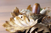 Acorn and oak leaves — Stock Photo