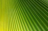 Palm Leaf — Foto de Stock
