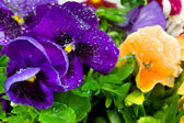Bahar çiçekleri — Stok fotoğraf