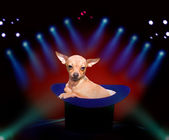 Doggy at circus — Stock Photo