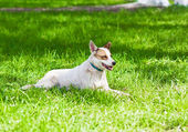 Dog grass — Stock Photo