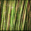Bamboo paper — Stock Photo