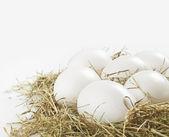 White eggs — Stock Photo