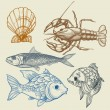 Fish, lobster, shell vector set - Stock Vector