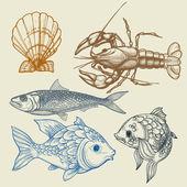 Fish, lobster, shell vector set — Stock Vector