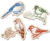 векторная коллекция птиц — Cтоковый вектор