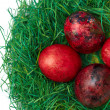 Easter eggs in nest — Stock Photo #10098813