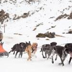 Pirena Advance 2012 sleigh race — Stock Photo