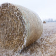 Wheat bale in the snow — Stock Photo