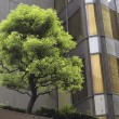 City tree — Stock Photo