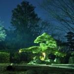 Night garden — Stock Photo #8076496