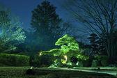 Night garden — Stock Photo