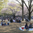Cherry Blossom-Saison in Tokio — Stockfoto