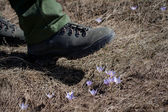 A shoe trampling flowers — Stock Photo