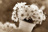 Bunch of chamomile in sepia — Stock Photo