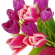 Bunch of pink and purple tulips — Stok fotoğraf