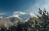Mountain summit view through tree winter landscape snow seasonal — Stock Photo