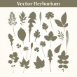 Vector Herbarium — Stock Vector