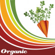Stock Vector: Carrot - Organic food background