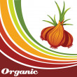 Onion - Organic food background — Stock Vector