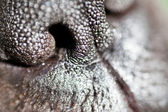 Dog nose extreme closeup — Stock Photo