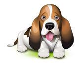 Basset Hound puppy — Stock Vector