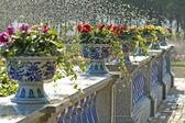 Pots of flowers — Stock Photo