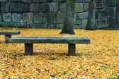 ławki w ogrodzie — Zdjęcie stockowe
