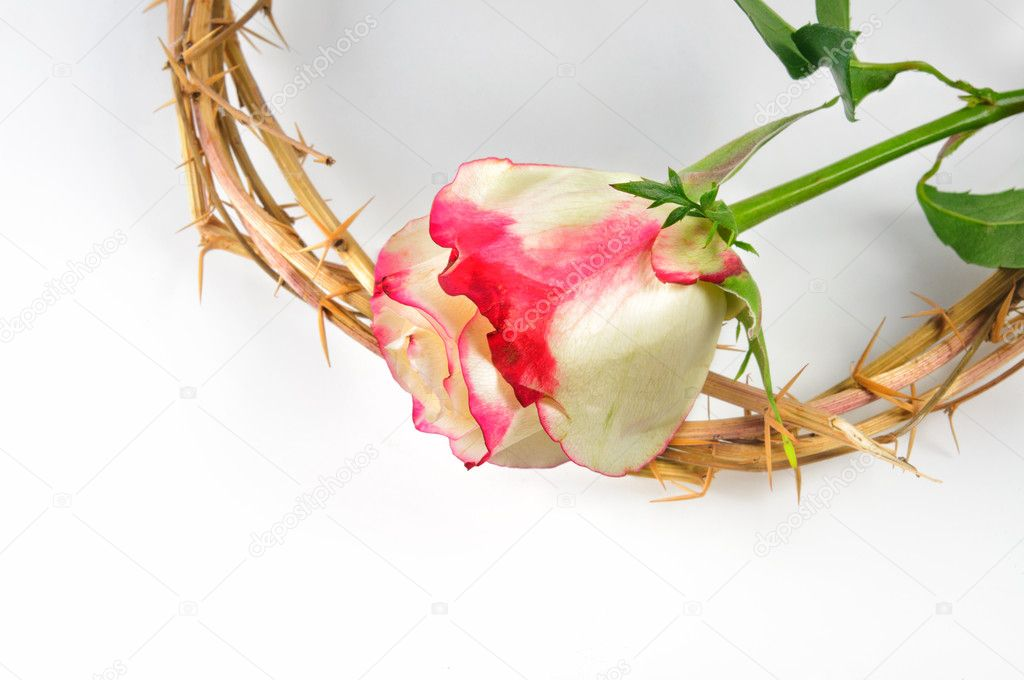 Crown Of Thorns And Rose Stock Photo 169 Vladischern 9600629