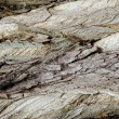 Bark — Stock Photo #10343181