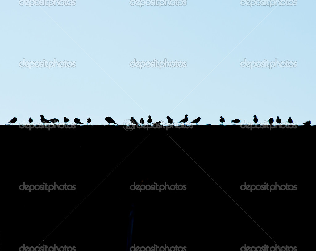 A group of seagulls sitting side by side on a rooftop.  Stock Photo #10369562