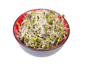 Fresh sprouts — Stockfoto