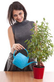 Woman irrigate plants in flowerpots — Stock Photo
