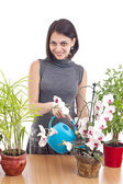 Woman watering orchid — Stock Photo