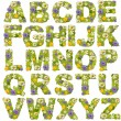 Green leaf whit flower fonts — Εικόνα Αρχείου #9204344