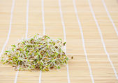 Fresh sprouts — Stock Photo
