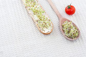 Sprout germ breakfast — Stock Photo