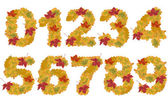 Autumn leaves numbers — Stock Photo