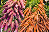 Radish and Carrots — Stock Photo