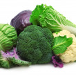 Collection cabbage — Stock Photo