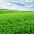 Field and the beautiful blue sky - Stock Photo